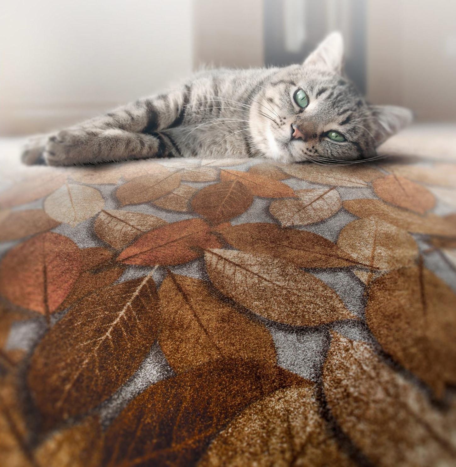 Zarif Mosavar Antibacterial carpet